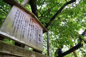 有名な梅の木